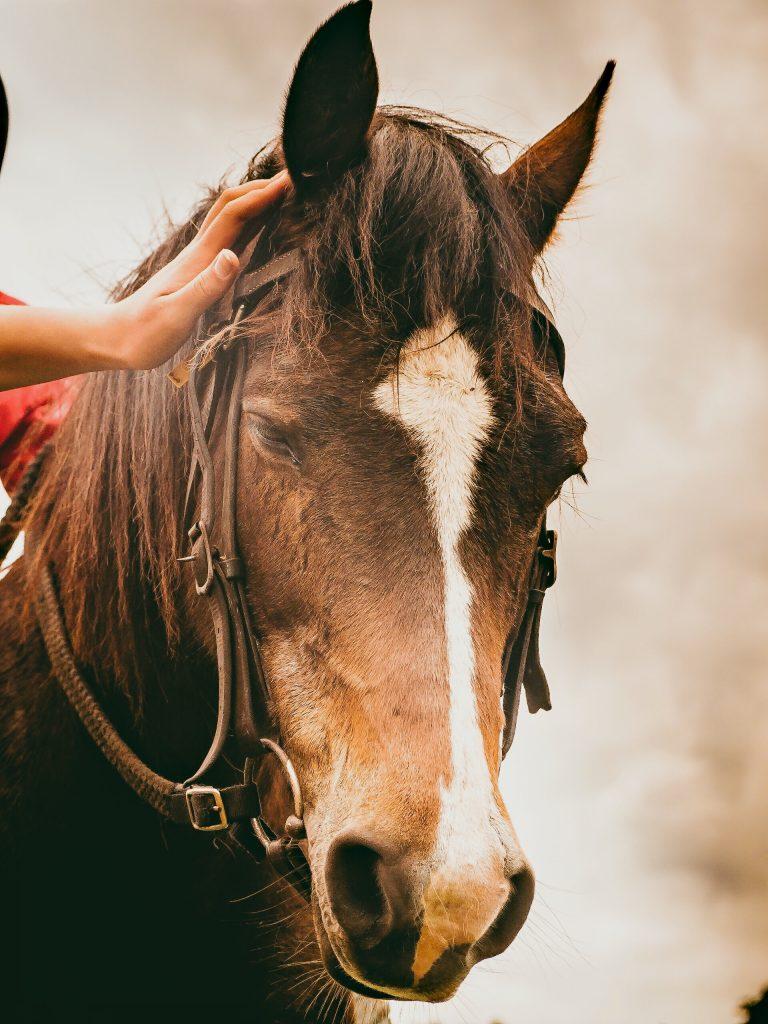 Paarden in Tarifa